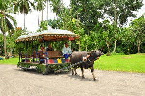 Villa Escudero. This place brings you back to the setting of a rustic Philippines where Filipino traditions come to life and constant appreciation. Riding in a carabao-driven cart serenaded by excellent folk artists are just some of the bonuses!